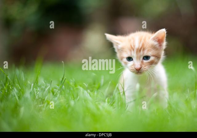 lonely sad cat - photo #40