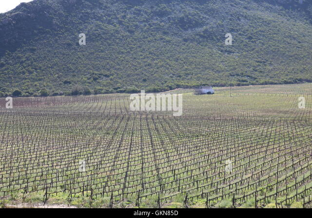 Winelands Near Montagu South Africa Scott Isitt