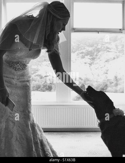 A brides best friend - Stock Image