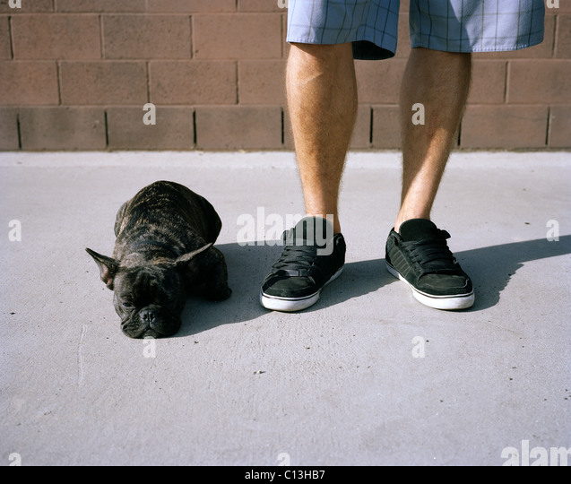 A French bulldog lying at its owner's feet - Stock-Bilder