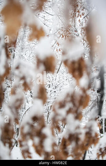 Trees covered with hoarfrost and snow in mountains - Stock Image
