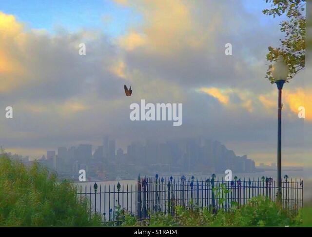 Butterfly and New York City skylines - Stock Image