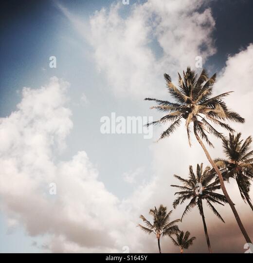 Palm trees and clouds. Maui, Hawaii USA - Stock Image