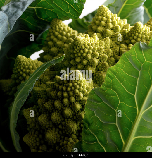 Romanesco cabbage - Stock-Bilder