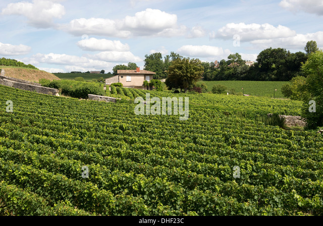 View over vineyards around the town of St Emilion in the Bordeaux Region of France - Stock Image