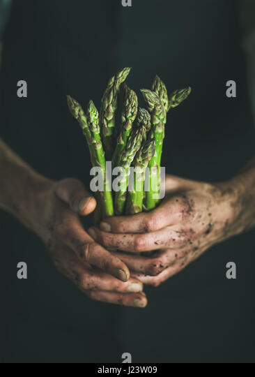 Bunch of fresh green asparagus in dirty man' s hands - Stock Image