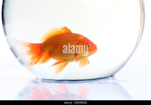 Bowel stock photos bowel stock images alamy for Fish stocking prices
