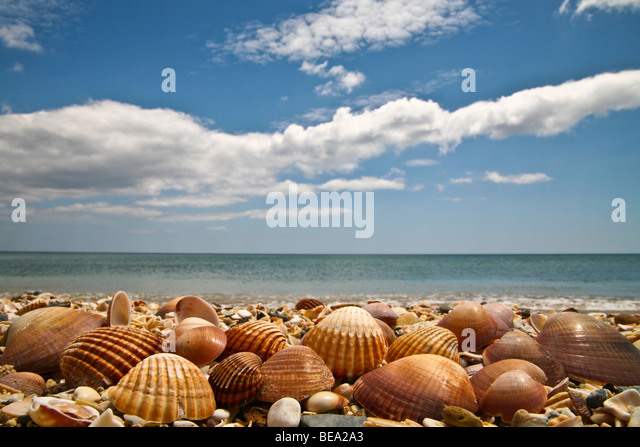 Delicate seashells on beach with blue sky and ocean in background - Stock Image
