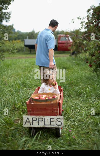 Father pulling wooden cart with daughter and apples - Stock Image