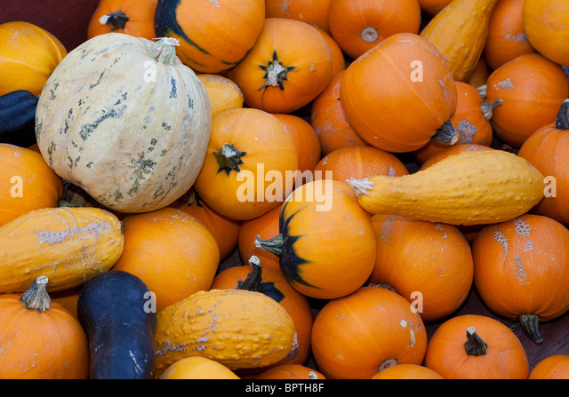 Pumpkin close up for background - Stock Image