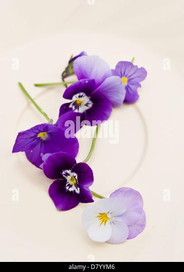 Purple edible violas on a white plate. - Stock Image