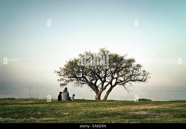 Argentina, Buenos Aires, Teenage girl (14-15) sitting in meadow with her dogs - Stock Image