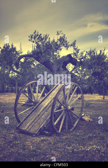 old straw cart in an olive grove - Stock-Bilder