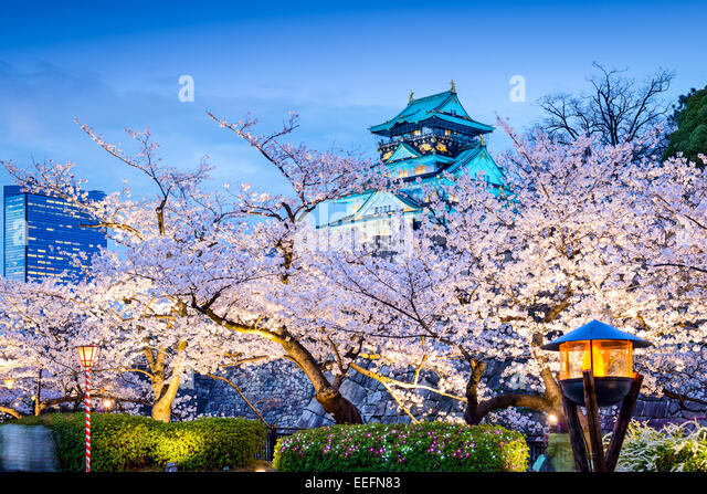 Osaka, Japan sakura at Osaka Castle. - Stock Image