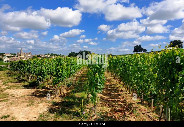 Village and vineyard of Saint-Emilion, Gironde, Bordeaux, France, Europe - Stock Image