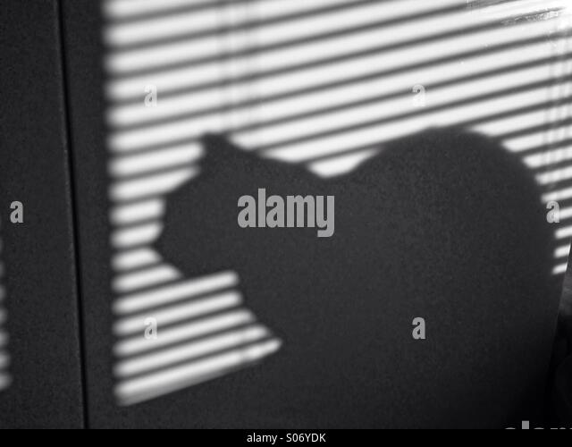 Shadow of car behind Venetian blinds - Stock Image