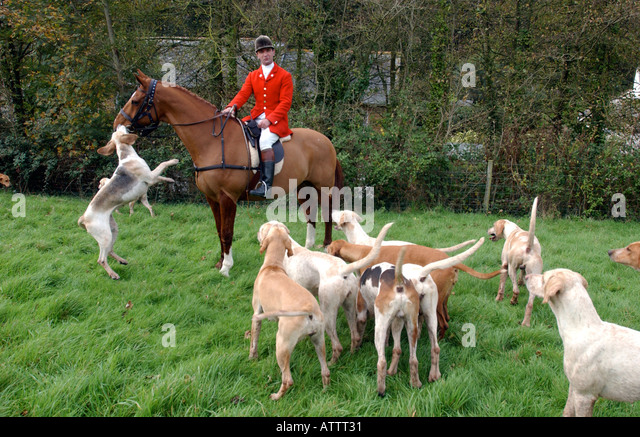 blackmore and sparkford vale hunt meet cardinal health