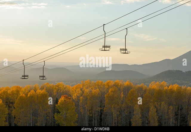 Aspens turn a bright yellow in Fall at the Arizona Snowbowl, near Flagstaff, Arizona, USA - Stock Image