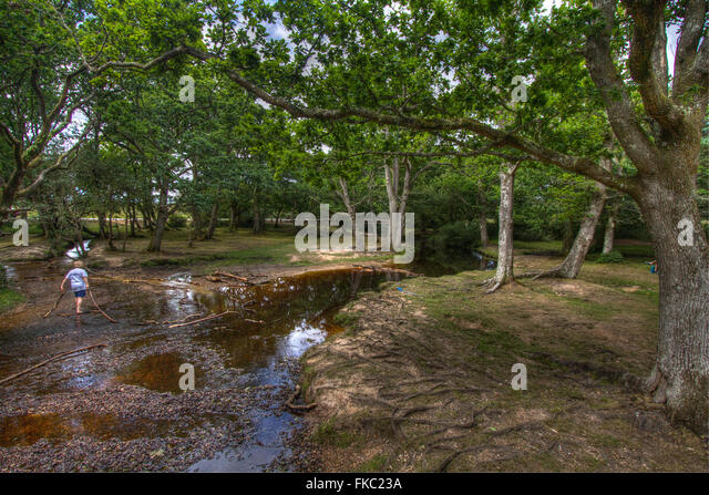 Man Cave Store Spring Lake Park Mn : Bridge in spring forest stock photos