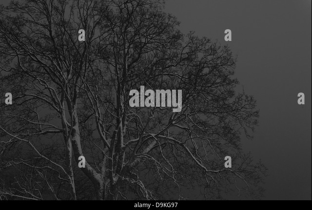 Grey tree against monochrome sky - Stock Image