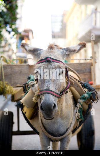 Donkey pulling cart - Stock Image
