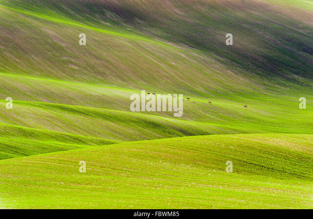 Czech countryside, south Moravia. - Stock-Bilder