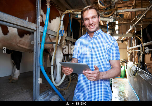 Dairy Farmer Using Digital Tablet In Milking Shed - Stock Image