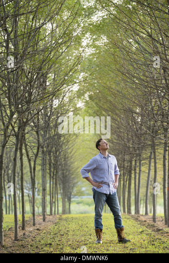A man  in an avenue of trees looking upwards. - Stock-Bilder