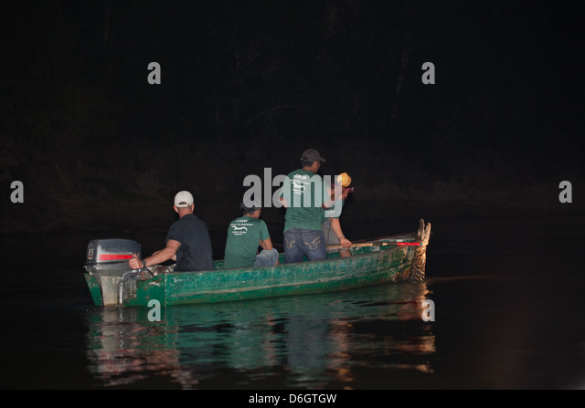 Guide And Researchers In A Boat Out Lamping For Caiman With Spotlight With  The Intention Of
