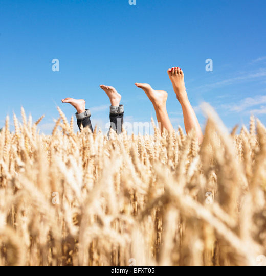 legs in wheat field - Stock Image