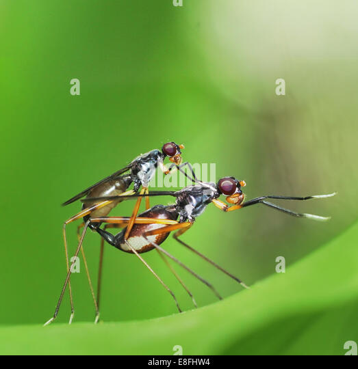 Mating insects - Stock-Bilder