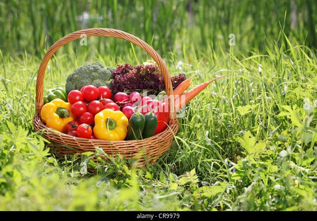 Basket full of organic vegetables on green grass. - Stock Image