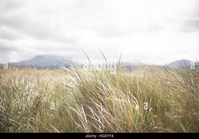 Sea grass background detail.  Donegal, Ireland - Stock-Bilder