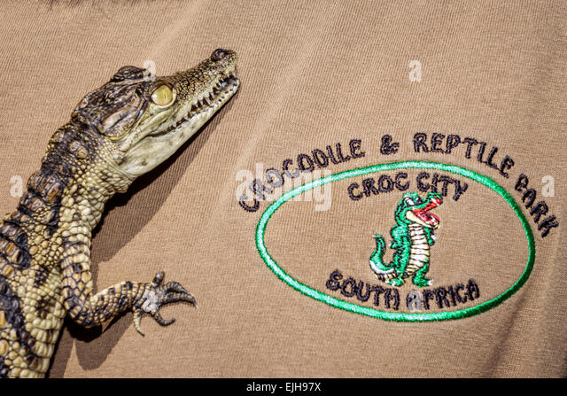 South Africa African Johannesburg Croc City Crocodile & and Reptile Park farm baby juvenile - Stock Image
