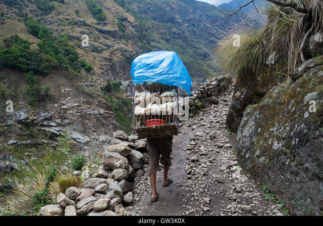 Nepalese Sherpa Hiking Mountain Trail Village .Young Man Climbing Loaded Bags Track Traveler Beautiful Noth Asia.Summer - Stock Image