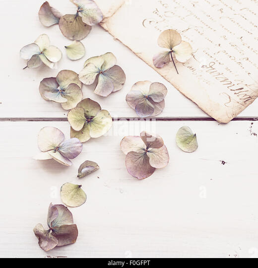 closeup of faded hydrangea flowers with vintage letter in the background - Stock-Bilder