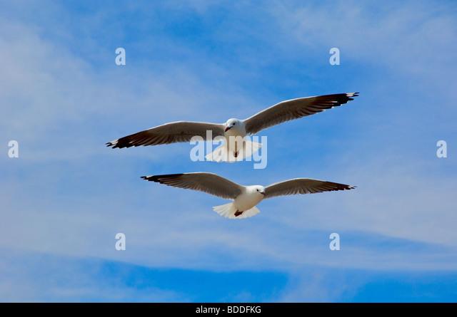 Flock of seagulls - Stock-Bilder
