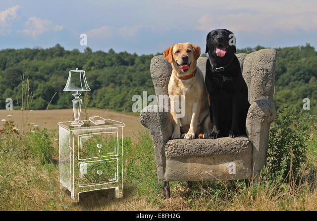 Czech Republic, Prague, Conceptual image of dogs in natural living room - Stock-Bilder
