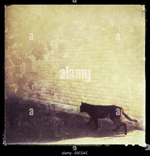Black stray cat in front of yellow brick wall, with grunge texture overlay and vintage frame. - Stock Image