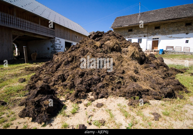 Farmyard Manure Stock Photos & Farmyard Manure Stock ...
