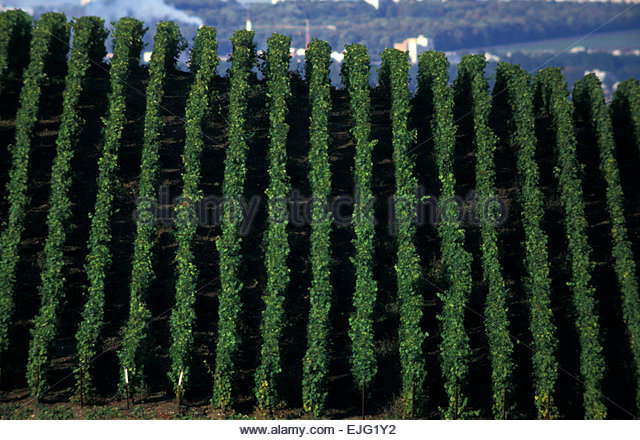 Reims stock photos reims stock images alamy for Champagne marne