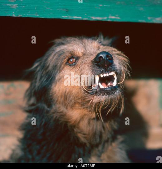 Mixed Breed Dog - Stock Image
