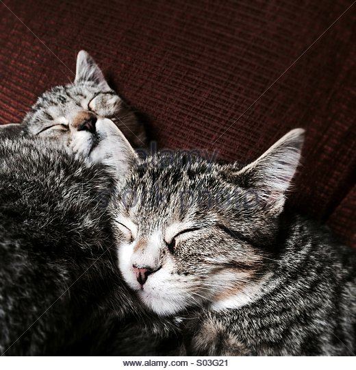 Two Cats Asleep - Stock Image