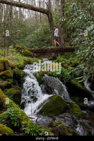 Woman Crosses Log Bridge and Water Fall to Left in Spring Forest - Stock Image