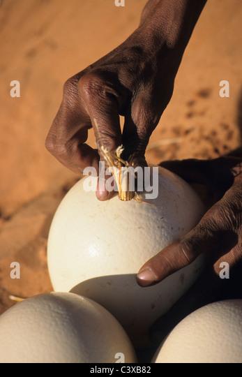 Namibia. Kalahari desert near Keetmanshoop. Bushman using ostrich egg as waterbottle. - Stock Image