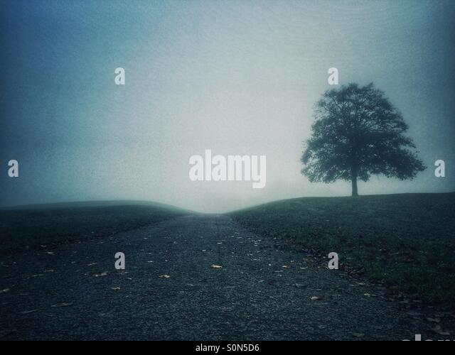 Tree on the hill - Stock Image