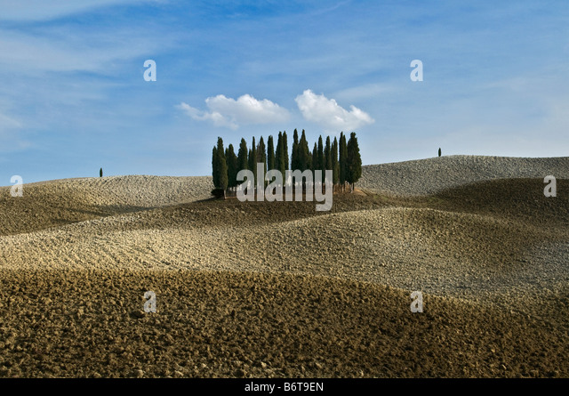 Small group of green cypress trees in the centre of curvey golden brown autumn fields of Tuscany high lighted by - Stock Image