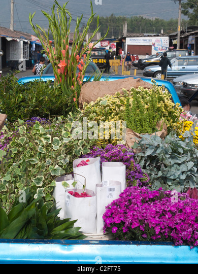 The back of a pickup truck holds a large selection of colorful flowers to be delivered to vendors at the public - Stock Image