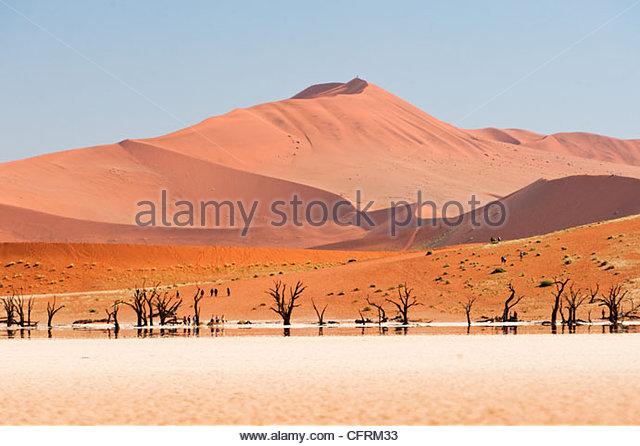 Dead Vlei, Namib-Naukluft Park, Namibia - Stock Image