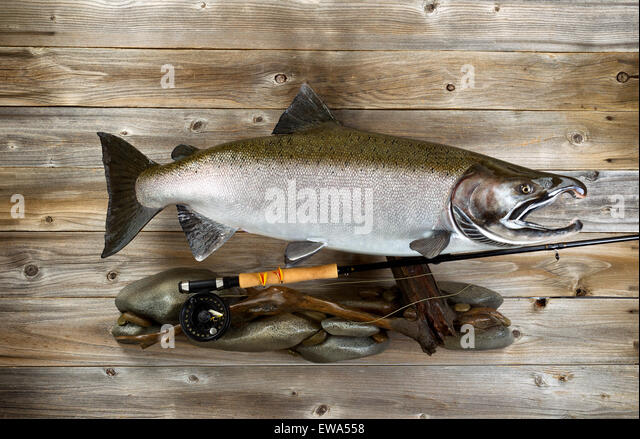 Native trout stock photos native trout stock images alamy for Fly fishing supplies near me